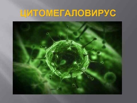 Антитела к цитомегаловирусу (Cytomegalovirus), IgG